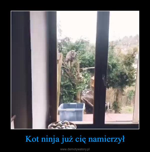 Kot ninja już cię namierzył –