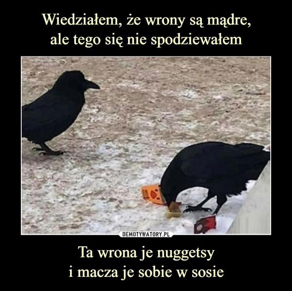 Ta wrona je nuggetsyi macza je sobie w sosie –