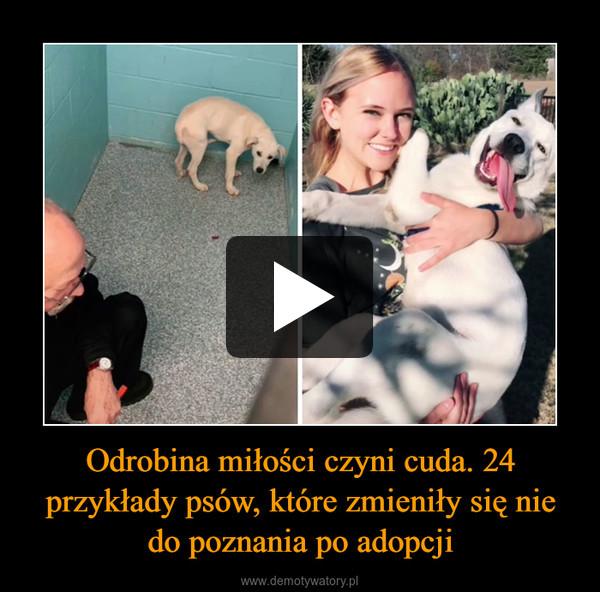 Odrobina miłości czyni cuda. 24 przykłady psów, które zmieniły się nie do poznania po adopcji –