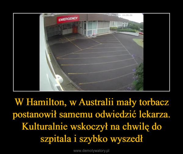 W Hamilton, w Australii mały torbacz postanowił samemu odwiedzić lekarza. Kulturalnie wskoczył na chwilę do szpitala i szybko wyszedł –