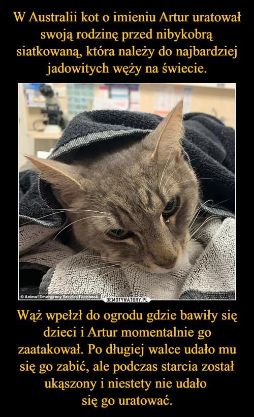 W Australii kot o imieniu Artur uratował swoją rodzinę przed nibykobrą siatkowaną, która należy do najbardziej jadowitych węży na świecie. Wąż wpełzł do ogrodu gdzie bawiły się dzieci i Artur momentalnie go zaatakował. Po długiej walce udało mu się go zabić, ale podczas starcia został ukąszony i niestety nie udało  się go uratować.