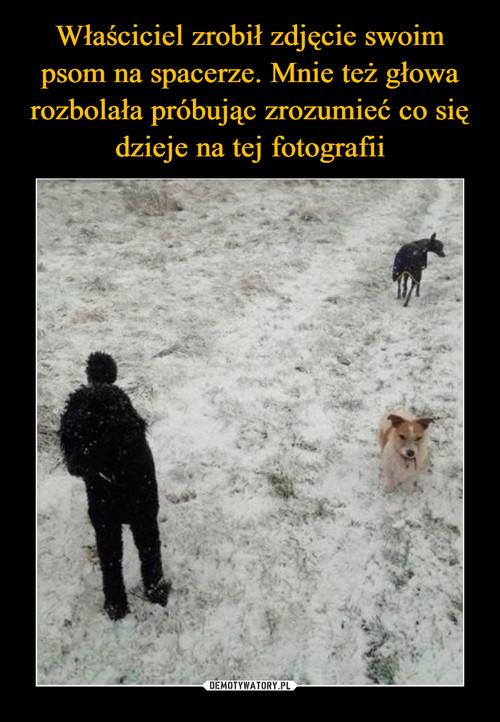Właściciel zrobił zdjęcie swoim psom na spacerze. Mnie też głowa rozbolała próbując zrozumieć co się dzieje na tej fotografii