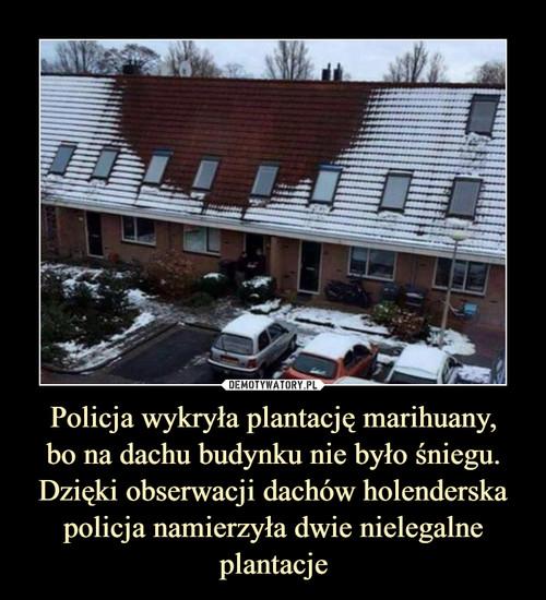 Policja wykryła plantację marihuany, bo na dachu budynku nie było śniegu. Dzięki obserwacji dachów holenderska policja namierzyła dwie nielegalne plantacje