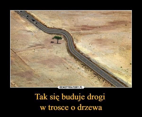 Tak się buduje drogi w trosce o drzewa –
