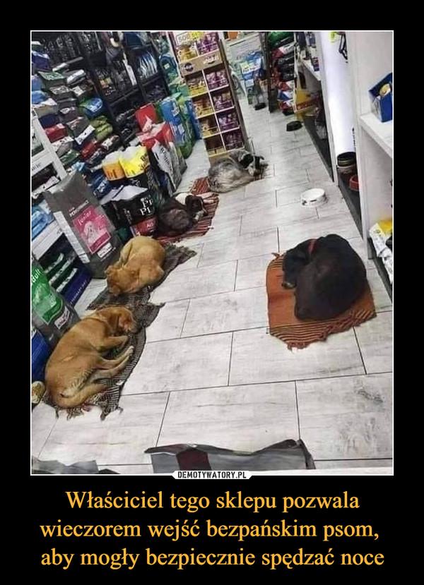 Właściciel tego sklepu pozwala wieczorem wejść bezpańskim psom, aby mogły bezpiecznie spędzać noce –