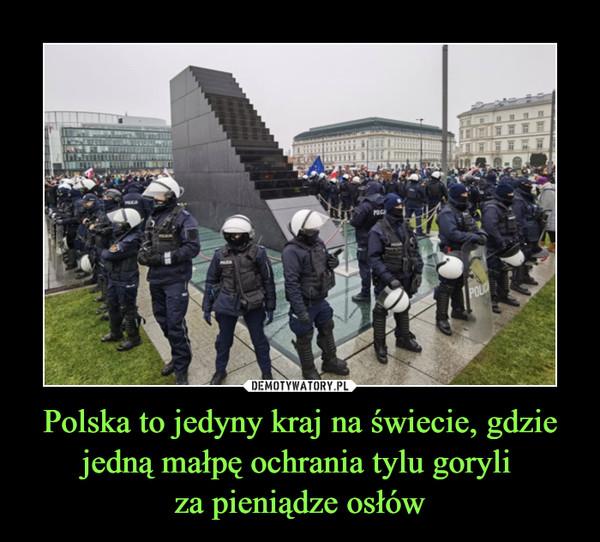 Polska to jedyny kraj na świecie, gdzie jedną małpę ochrania tylu goryli za pieniądze osłów –