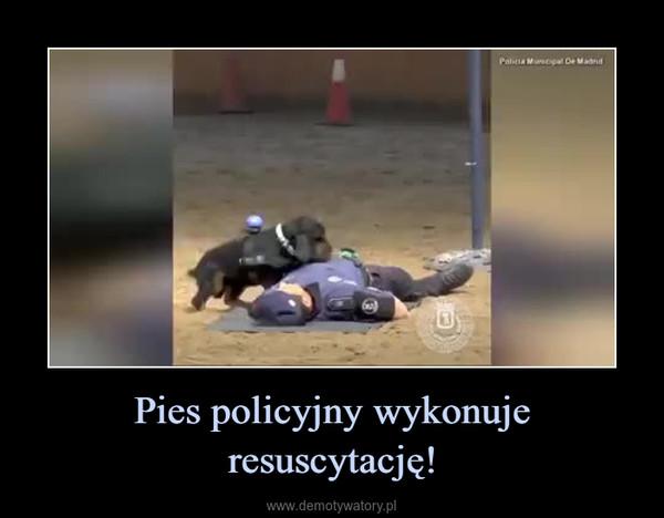 Pies policyjny wykonuje resuscytację! –