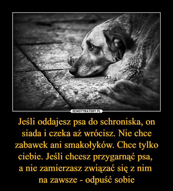Jeśli oddajesz psa do schroniska, on siada i czeka aż wrócisz. Nie chce zabawek ani smakołyków. Chce tylko ciebie. Jeśli chcesz przygarnąć psa, a nie zamierzasz związać się z nim na zawsze - odpuść sobie –