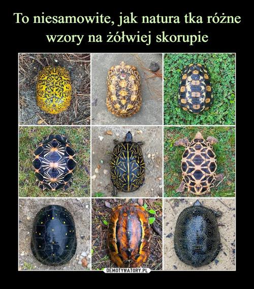 To niesamowite, jak natura tka różne wzory na żółwiej skorupie
