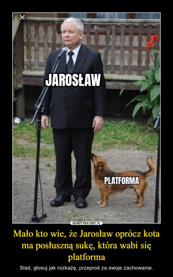 Mało kto wie, że Jarosław oprócz kota ma posłuszną sukę, która wabi się platforma – Siad, głosuj jak rozkażę, przeproś za swoje zachowanie.