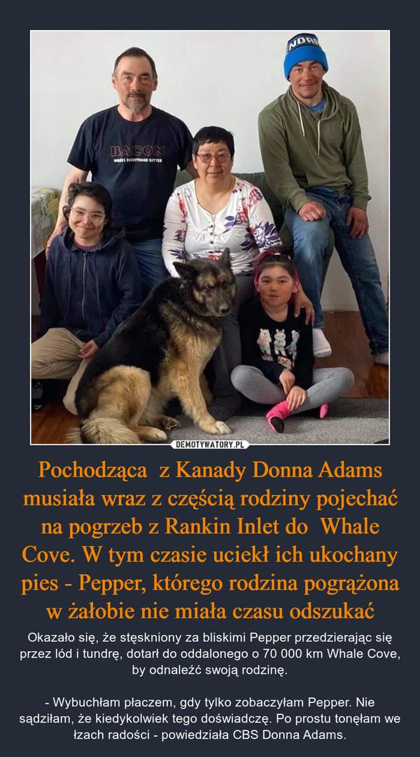 Pochodząca  z Kanady Donna Adams musiała wraz z częścią rodziny pojechać na pogrzeb z Rankin Inlet do  Whale Cove. W tym czasie uciekł ich ukochany pies - Pepper, którego rodzina pogrążona w żałobie nie miała czasu odszukać – Okazało się, że stęskniony za bliskimi Pepper przedzierając się przez lód i tundrę, dotarł do oddalonego o 70 000 km Whale Cove, by odnaleźć swoją rodzinę.- Wybuchłam płaczem, gdy tylko zobaczyłam Pepper. Nie sądziłam, że kiedykolwiek tego doświadczę. Po prostu tonęłam we łzach radości - powiedziała CBS Donna Adams.