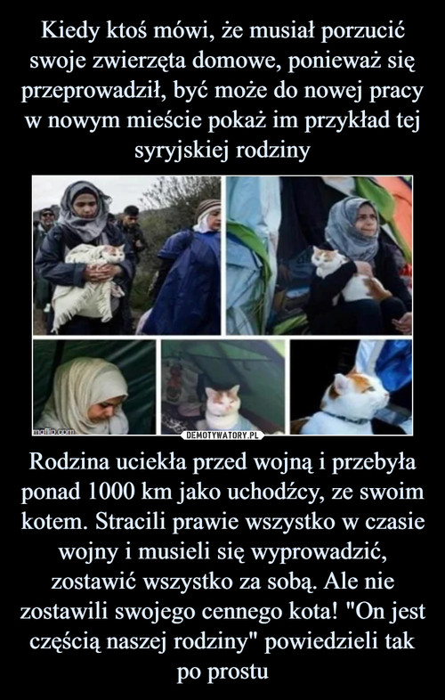 """Kiedy ktoś mówi, że musiał porzucić swoje zwierzęta domowe, ponieważ się przeprowadził, być może do nowej pracy w nowym mieście pokaż im przykład tej syryjskiej rodziny Rodzina uciekła przed wojną i przebyła ponad 1000 km jako uchodźcy, ze swoim kotem. Stracili prawie wszystko w czasie wojny i musieli się wyprowadzić, zostawić wszystko za sobą. Ale nie zostawili swojego cennego kota! """"On jest częścią naszej rodziny"""" powiedzieli tak po prostu"""