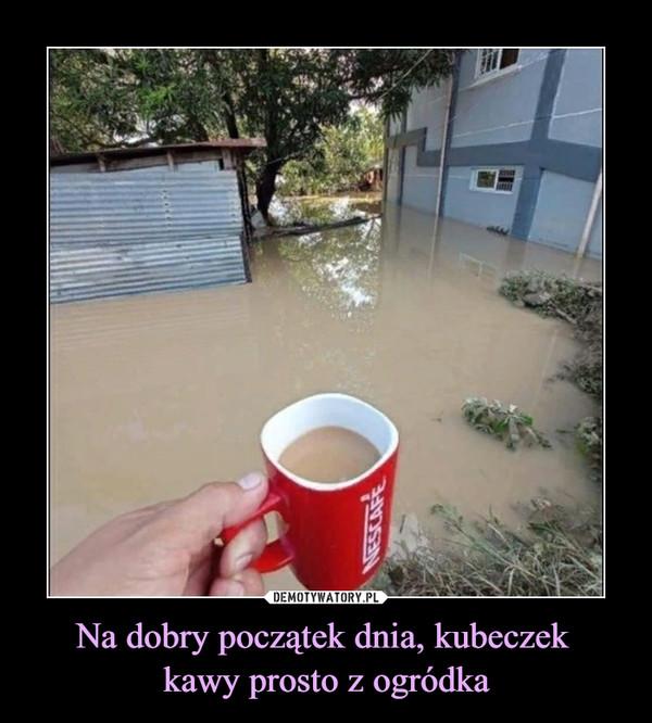 Na dobry początek dnia, kubeczek kawy prosto z ogródka –