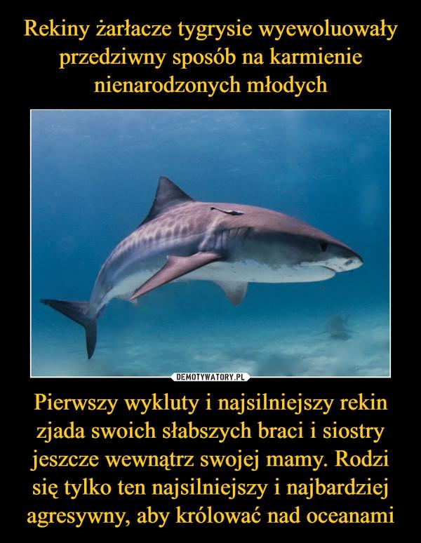 Pierwszy wykluty i najsilniejszy rekin zjada swoich słabszych braci i siostry jeszcze wewnątrz swojej mamy. Rodzi się tylko ten najsilniejszy i najbardziej agresywny, aby królować nad oceanami –