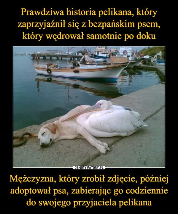 Mężczyzna, który zrobił zdjęcie, później adoptował psa, zabierając go codziennie do swojego przyjaciela pelikana –