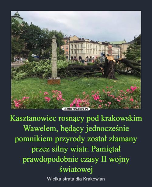 Kasztanowiec rosnący pod krakowskim Wawelem, będący jednocześnie pomnikiem przyrody został złamany przez silny wiatr. Pamiętał prawdopodobnie czasy II wojny światowej