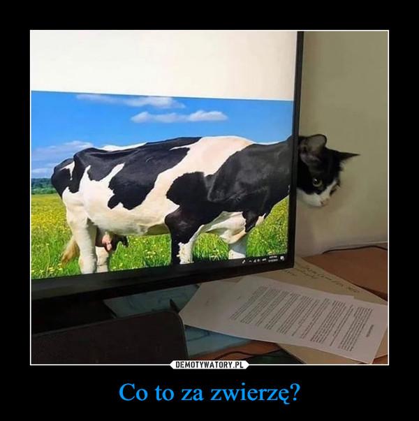 Co to za zwierzę? –