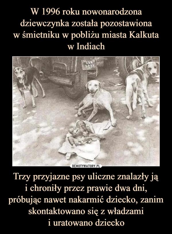 Trzy przyjazne psy uliczne znalazły jąi chroniły przez prawie dwa dni, próbując nawet nakarmić dziecko, zanim skontaktowano się z władzamii uratowano dziecko –