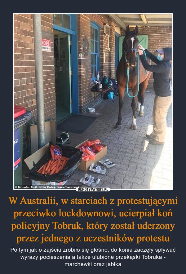 W Australii, w starciach z protestującymi przeciwko lockdownowi, ucierpiał koń policyjny Tobruk, który został uderzony przez jednego z uczestników protestu – Po tym jak o zajściu zrobiło się głośno, do konia zaczęły spływać wyrazy pocieszenia a także ulubione przekąski Tobruka - marchewki oraz jabłka