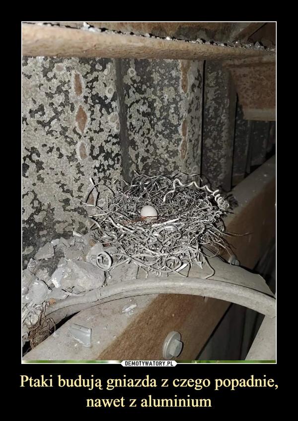 Ptaki budują gniazda z czego popadnie, nawet z aluminium –