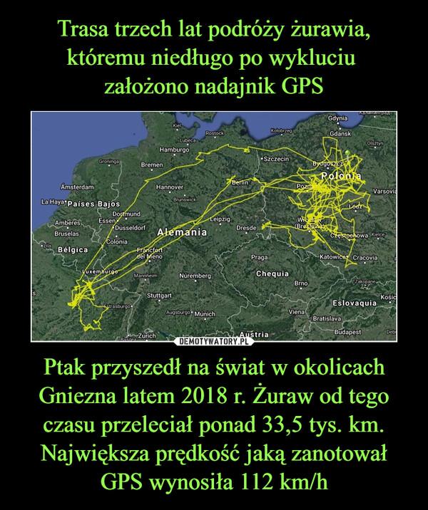 Ptak przyszedł na świat w okolicach Gniezna latem 2018 r. Żuraw od tego czasu przeleciał ponad 33,5 tys. km. Największa prędkość jaką zanotował GPS wynosiła 112 km/h –