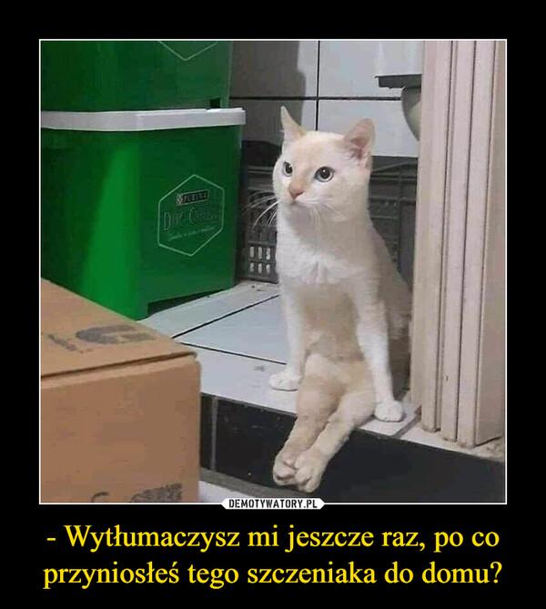 - Wytłumaczysz mi jeszcze raz, po co przyniosłeś tego szczeniaka do domu? –