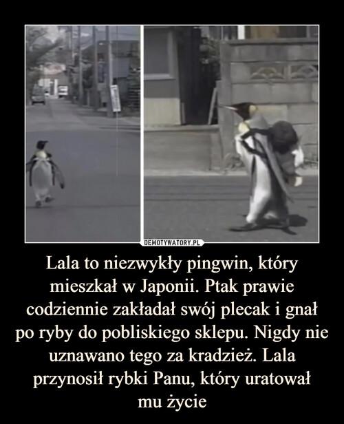 Lala to niezwykły pingwin, który mieszkał w Japonii. Ptak prawie codziennie zakładał swój plecak i gnał po ryby do pobliskiego sklepu. Nigdy nie uznawano tego za kradzież. Lala przynosił rybki Panu, który uratował mu życie