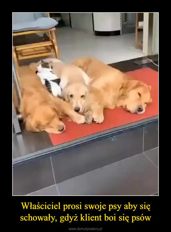 Właściciel prosi swoje psy aby się schowały, gdyż klient boi się psów –