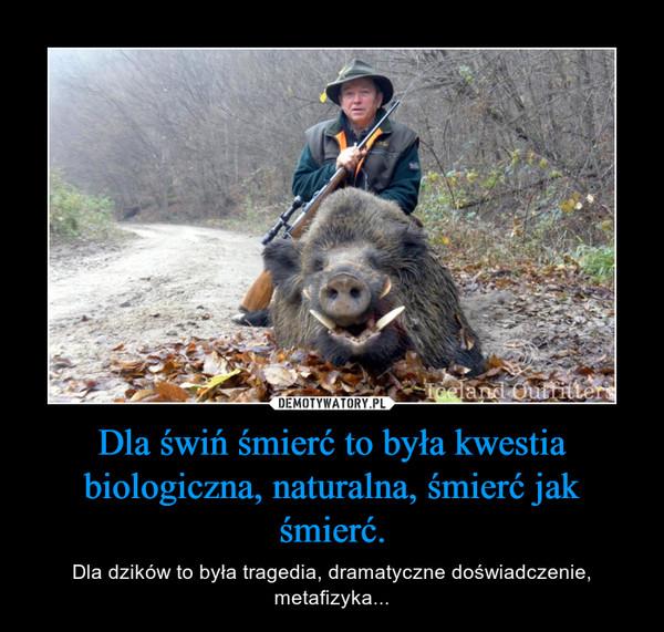 Dla świń śmierć to była kwestia biologiczna, naturalna, śmierć jak śmierć. – Dla dzików to była tragedia, dramatyczne doświadczenie, metafizyka...